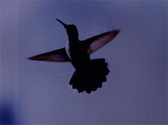 kolibri.web